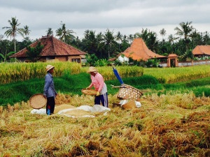 0367_Bali_11-2013
